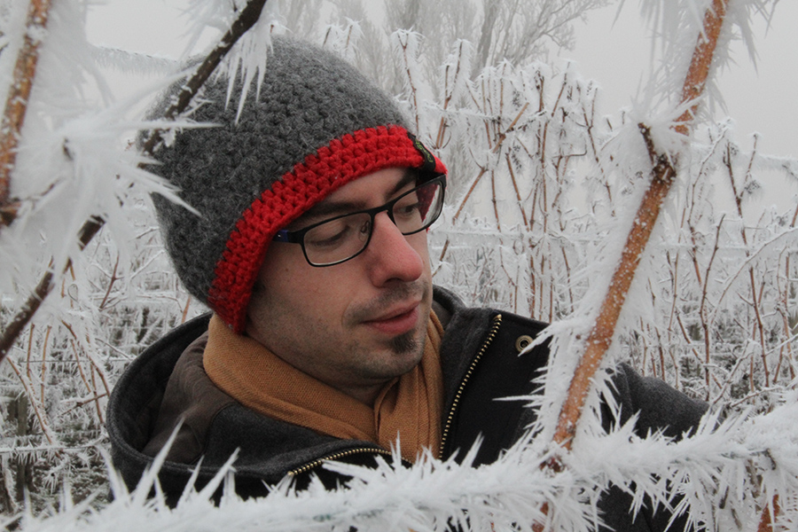 Frost auf den Reben