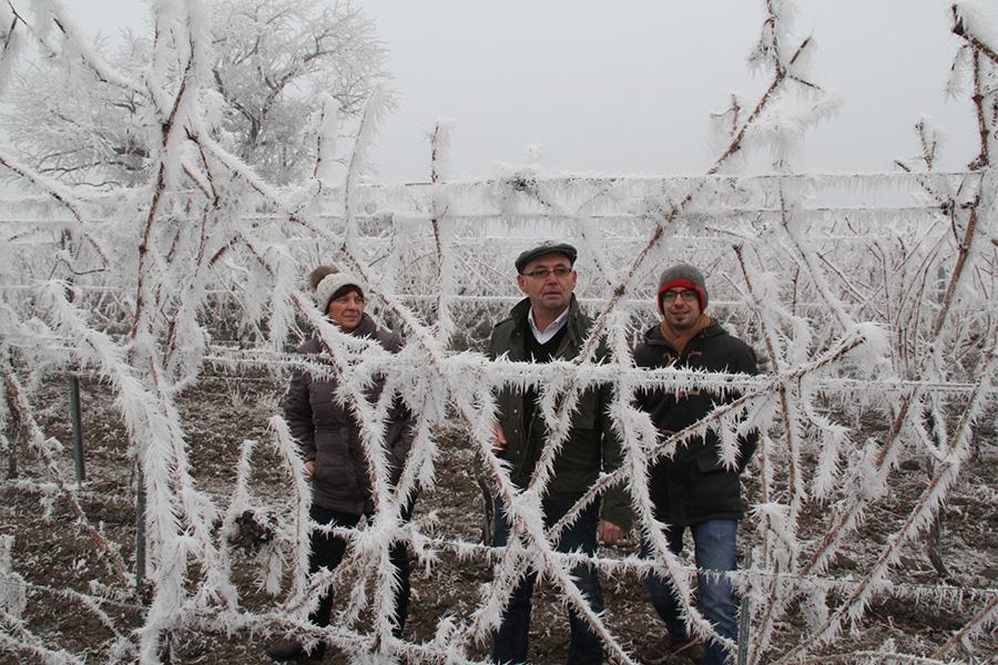 Familie Schwarzbauer in einem Weinberg