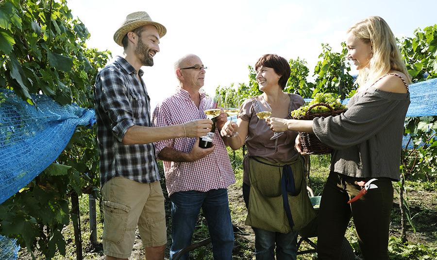 Im Weingarten Schwarzbauer von Steve Haider