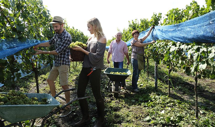 Weingarten Schwarzbauer von Steve Haider